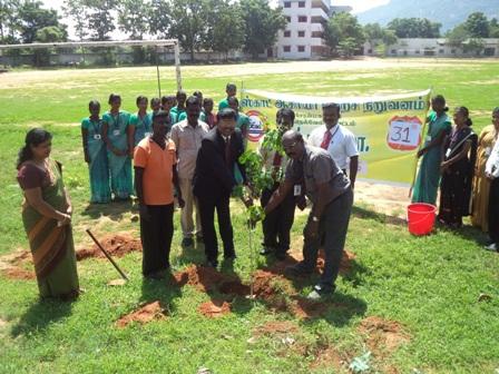 Tree Plant 001