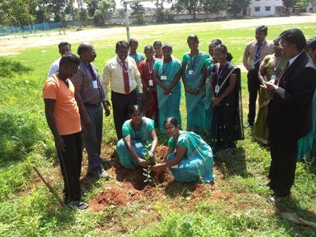 Tree Plant 002